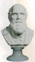 Bust of Charles Darwin Marble Sculpture 9.5