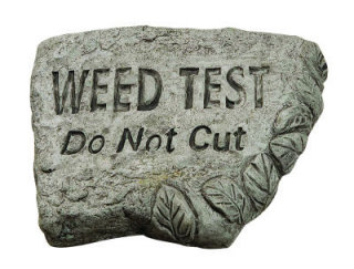 Weed Test Do Not Cut Stone