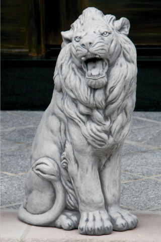 Roaring Sitting Lion Right Statue 24