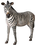 African Zebra Life-Size Statue