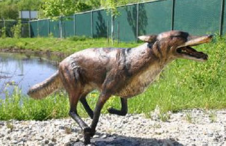 Coyote or Fox Bronze Sculpture