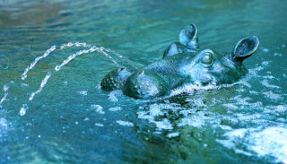Hippo Head Water Feature Piped Garden Sculpture