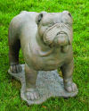 English Bulldog Life-Size Statue
