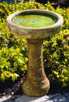 One Piece Humming Bird Bath 21.5