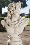 Apollo Belvedere Sculptural Bust Larger than Life Statue