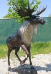 Moose Bronze Grand Scale Sculpture